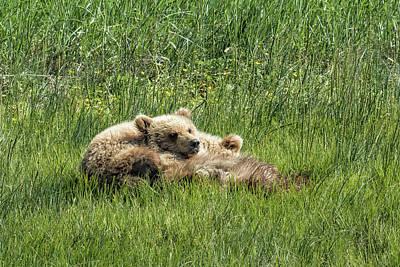 Photograph - Siblings Make Good Pillows - Bear Cubs 1 by Belinda Greb
