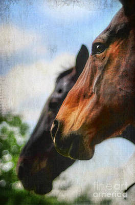Kentucky Horse Park Photograph - Side By Side by Darren Fisher