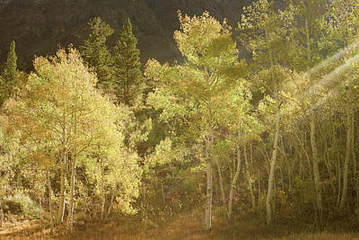 Photograph - Side-lit Aspens - Autumn In Eastern Sierra California by Ram Vasudev