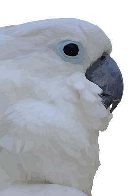 Photograph - Side Portrait Of A Blue-eyed Cockatoo Isolated by Tracey Harrington-Simpson