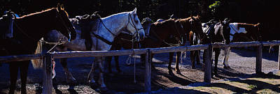 Side Profile Of Five Horses, Us Glacier Art Print by Panoramic Images