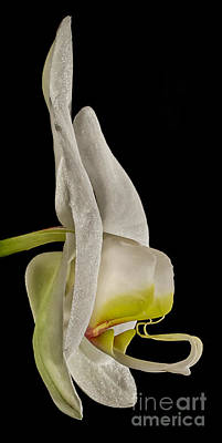 Abstract Oil Paintings Color Pattern And Texture - Side View of White Orchid HDR by Mitch Johanson
