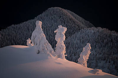 Photograph - Sidelit Snow Ghosts by Adam Gibbs