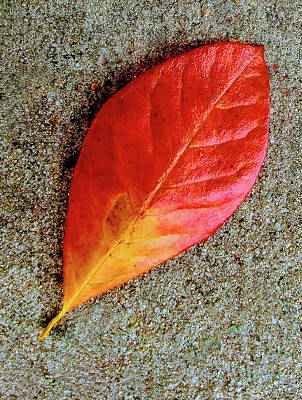 Photograph - Sidewalk Autumn Leaf by Roger Bester