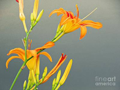 Photograph - Sidewalk Lilies by Sarah Loft