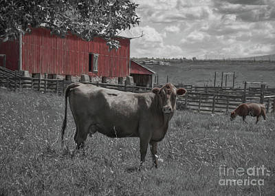 Photograph - Sienna Cow And Red Barn by Janice Rae Pariza