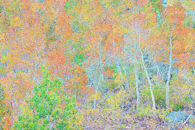 Photograph - Sierra Autumn Color Palette by Ram Vasudev