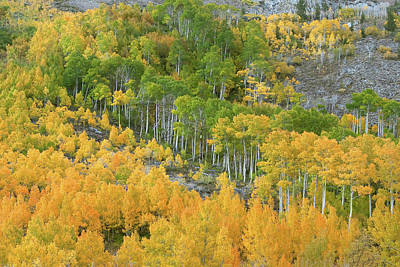 Photograph - Sierra Autumn Colors by Ram Vasudev