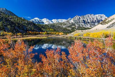 Photograph - Sierra Foliage by Tassanee Angiolillo