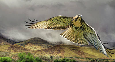 Red Tail Hawk Photograph - Sierra Mist by Donna Kennedy