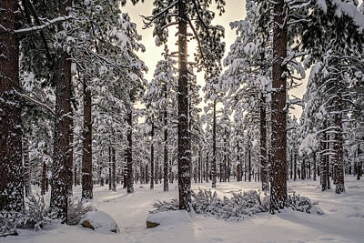 Photograph - Sierra Nevada Forest by Maria Coulson