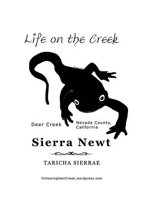 Digital Art - Sierra Newt - Black by Lisa Redfern