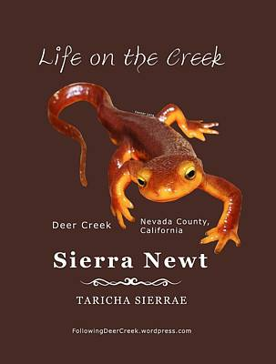 Newts Digital Art - Sierra Newt - Color Newt - White Text by Lisa Redfern