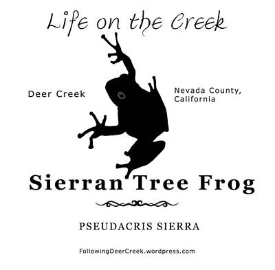 Digital Art - Sierran Tree Frog - Black Graphics by Lisa Redfern