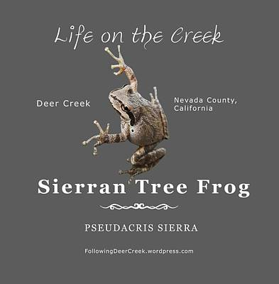 Digital Art - Sierran Tree Frog - Photo Frog, White Text by Lisa Redfern