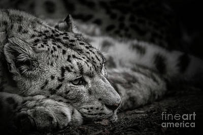 Photograph - Siesta by Brad Allen Fine Art