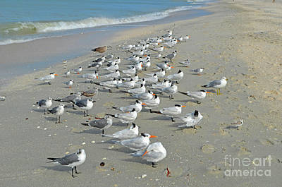 Digital Art - Siesta Key Birds by Eva Kaufman