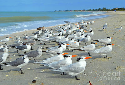 Digital Art - Siesta Key Seabirds by Eva Kaufman