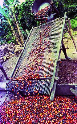 Photograph - Sieving Palm Kernel Fruits by Muyiwa OSIFUYE