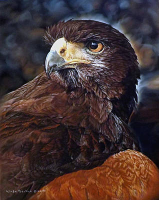 Painting - Sig The Harris Hawk by Linda Becker