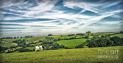 Photograph - Sights In England - Cow In Pasture by Walt Foegelle
