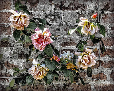Photograph - Sights In England - Roses by Walt Foegelle
