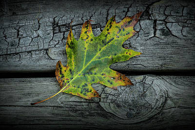 Photograph - Sign Of Autumn A Fallen Oak Leaf by Randall Nyhof