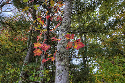 Digital Art - Sign Of Fall by Patrick Groleau