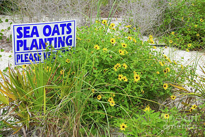 Photograph - Sign On A Florida Beach Keep Off Sea Oats Planting by Vizual Studio