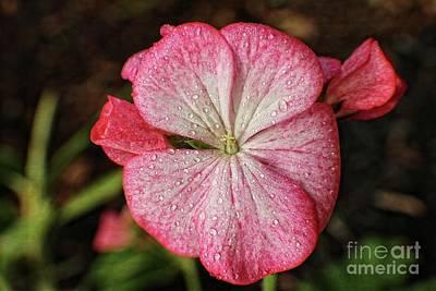 Photograph - Signature Pink by Ella Kaye Dickey
