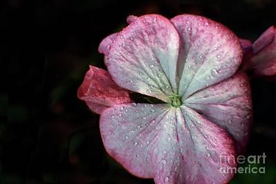 Photograph - Signature Pink Three by Ella Kaye Dickey