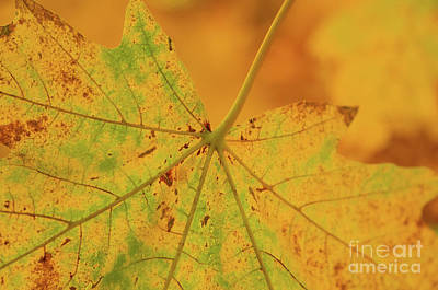 Photograph - Signs Of Autumn  by Nick Boren