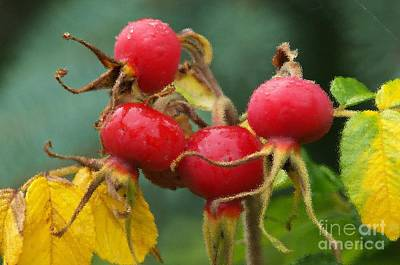 Photograph - Signs Of Fall 2 by Sharon Talson