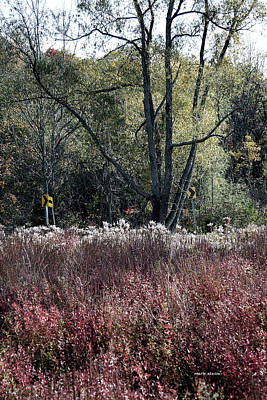 Photograph - Signs Of Fall by Mark Alesse