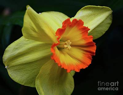Photograph - Signs Of Spring by Cindy Manero