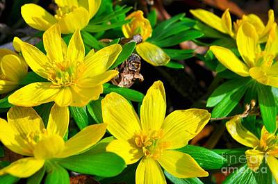 Photograph - Signs Of Spring by Nona Kumah