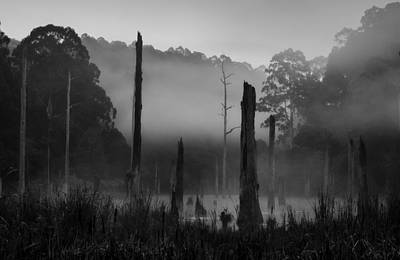 Photograph - Silence 5 by Mihai Florea
