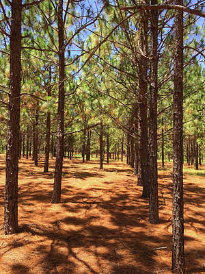 Photograph - Silence In The Pines by Matthew Seufer