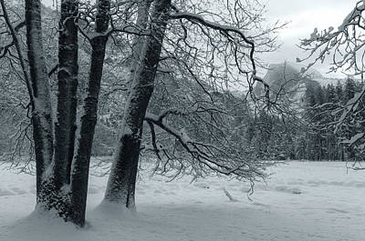 Photograph - Silence Of The Winter by Jonathan Nguyen