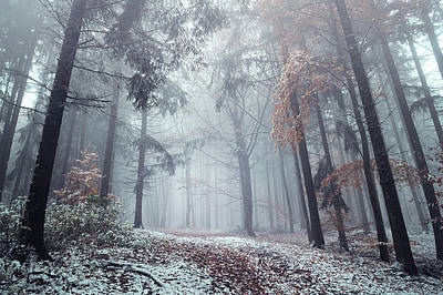 Photograph - Silence Of Winter Woods by Jenny Rainbow