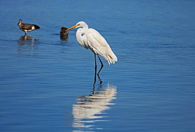 Photograph - Silence On Sanibel by Michiale Schneider