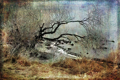 Photograph - Silent Beach by Randi Grace Nilsberg