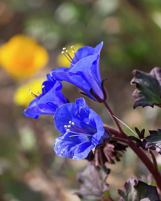Photograph - Silent Bells O'blue by Ryan Seek