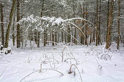 Photograph - Silent Dance Secrets Of A Winter Forest by Angelo Marcialis