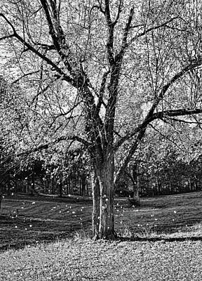 Photograph - Silent Fall - Bw by Greg Jackson