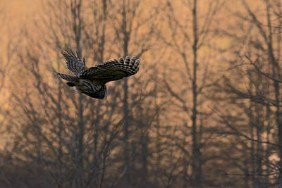 Photograph - Silent Flight by Linda Shannon Morgan