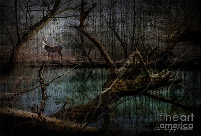 Photograph - Silent Forest by Chris Armytage