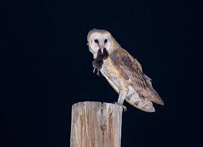 Barn Owl Photograph - Silent Hunter by Judi Dressler