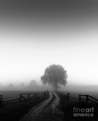 Photograph -  Silent Morning  by Franziskus Pfleghart