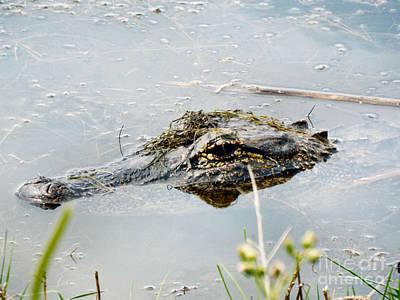 Photograph - Silent Predator by Audrey Van Tassell